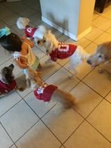 aubrey and pups